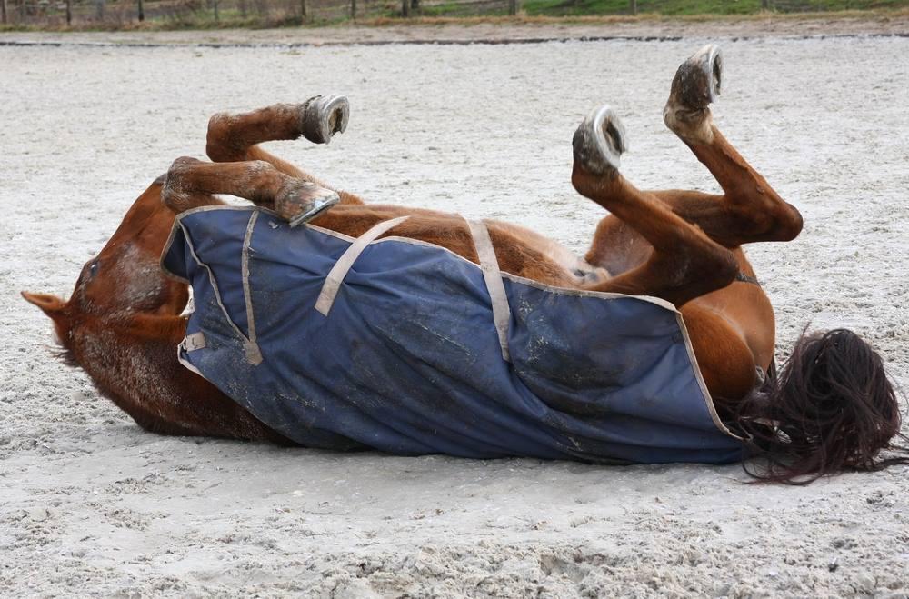Pferd mit Outdoordecke beim Wälzen